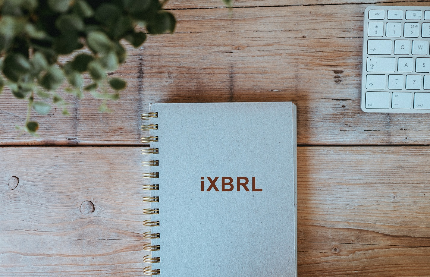 XBRL-guide